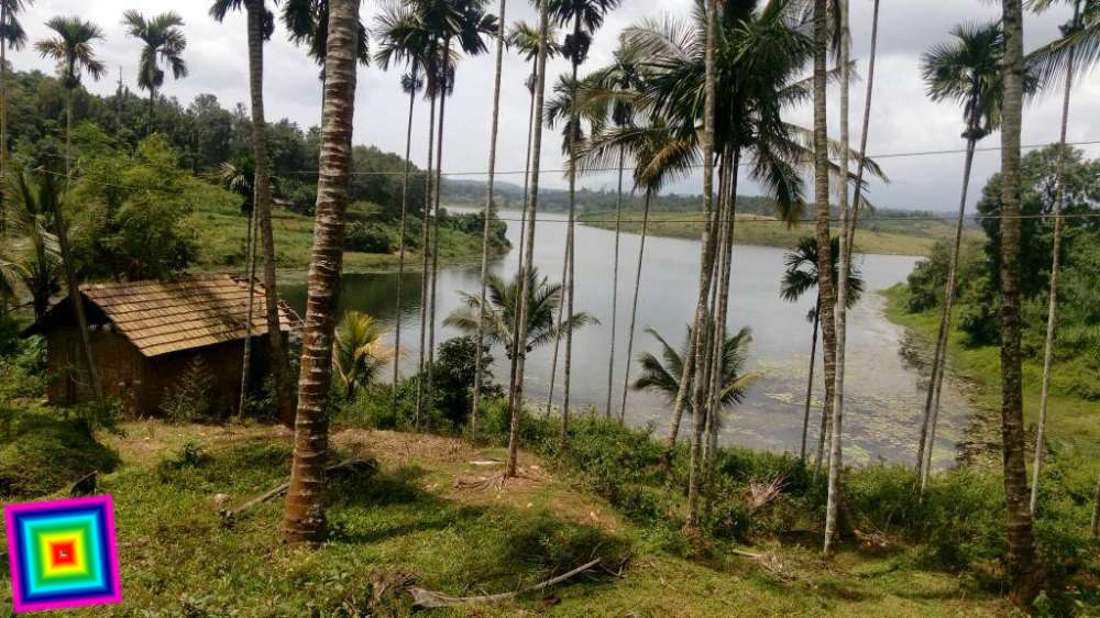 REAL ESTATE : 3 5 Acres plot for sale in Ambalavayal Ph