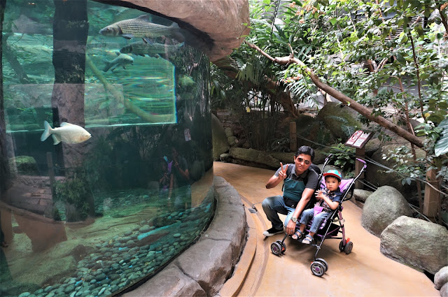 Visit Underwater World Langkawi & Shopping At The Zone On Last Day In Langkawi
