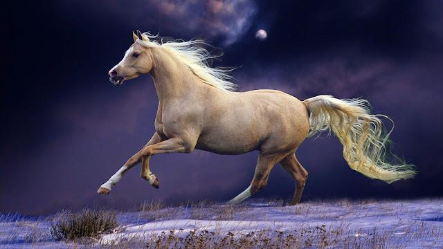 Papel de Parede Animal Cavalo Branco para pc 3d hd Horse Wallpaper image
