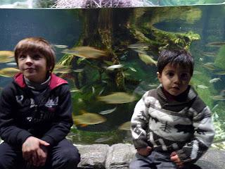 Izan y Joel en el Sea Life.
