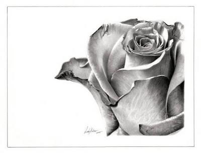 dibujo artístico realista a lápiz de una rosa