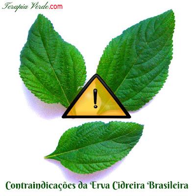 Contraindicações da Erva-cidreira brasileira