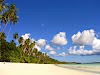 Daftar Fam Di Provinsi Maluku
