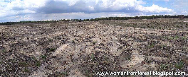 http://womanfromforest.blogspot.com/2016/06/rosliny-z-terenow-olkusza-puszczy.html