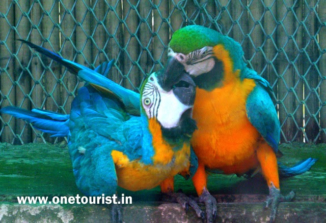 parrot , parrot bird , parrot images ,parrot photos , parrot wallpaper , parrot images download