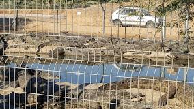 קרולוקו - חוות התנינים בצופר