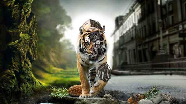 hayvan 3d resimler