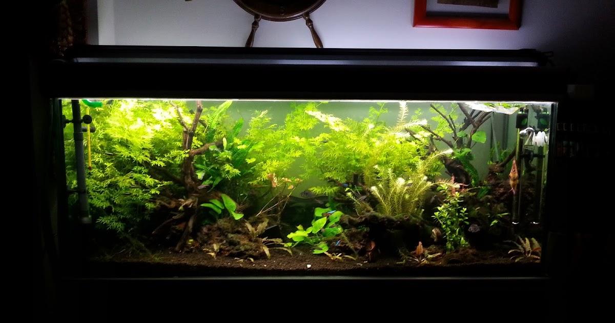 Aquascaping spain greenroom by fernando juaristi alvarez - Aquascape espana ...