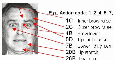 Ekman s facial action coding system