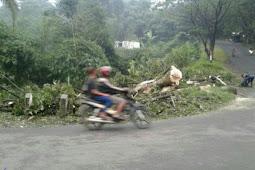 Pohon Tumbang Tutupi Jalan Alternatif Jelegong - Nagrak Kabupaten Sukabumi