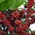 (29/03/2017)Simpósio de Revitalização da Cafeicultura em Ibaiti