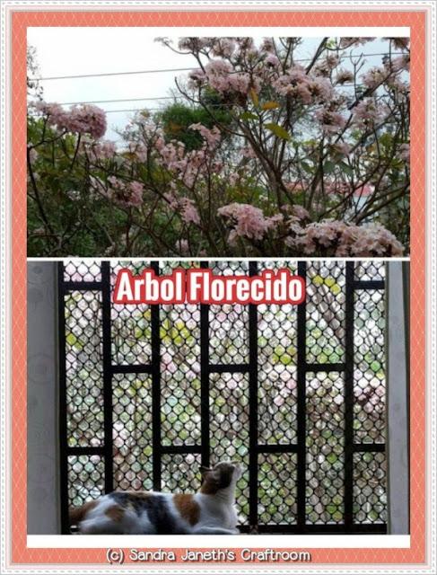Gato, Menchis, árbol florecido