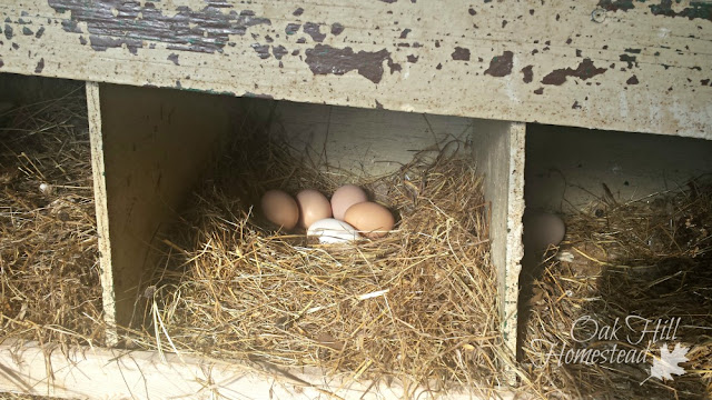 The chickens are enjoying their new nestboxes