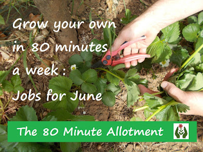 The 80 Minute Allotment June Jobs Green Fingered Blog