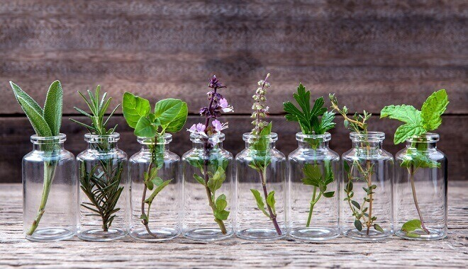 10-herbs-you-can-grow-indoors-all-year-long-in-water