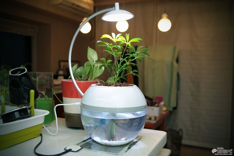 What Live Plants Are Safe for Betta Fish?