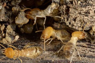 شركة مكافحة حشرات بالطائف وأفضل رش مبيدات بالطائف