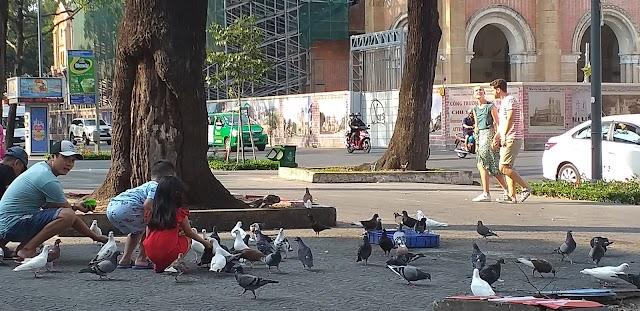 Cà phê ngắm đàn chim Câu tắm giữa Sài Gòn