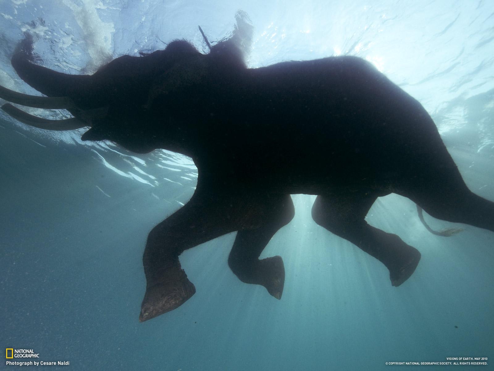 Fakta Fakta Terselubung Tentang Gajah Model Terbaru