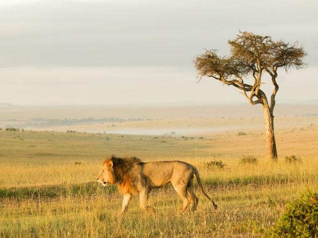 Leone Africa