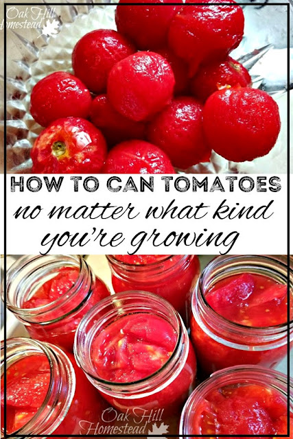 How to can tomatoes, no matter what kind you're growing!  From Oak Hill Homestead