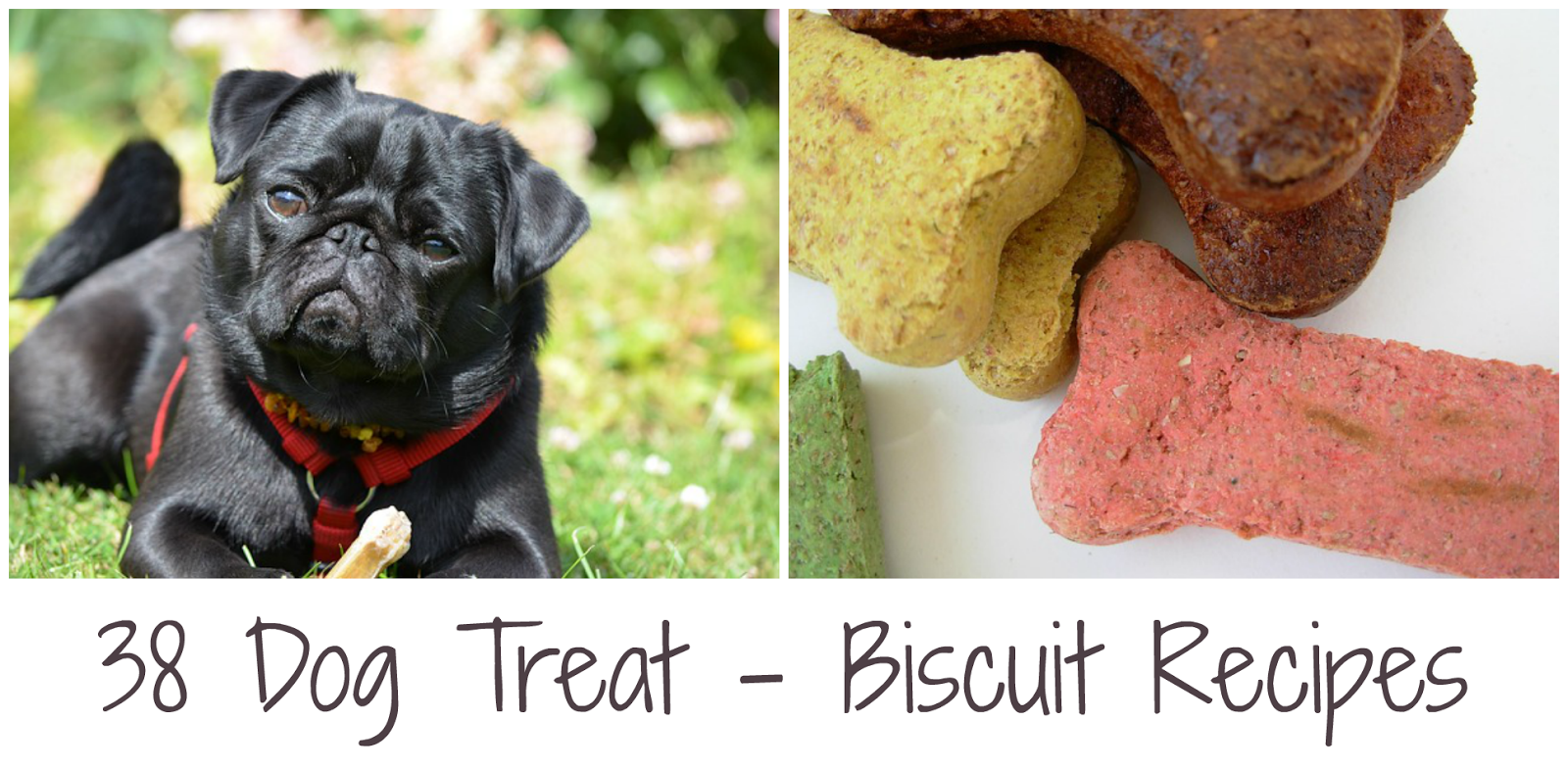Dog Treats & Biscuits | Becky Cooks Lightly
