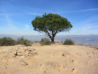 The Tree on Burbank Peak