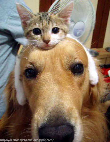 Funny cat and dog.