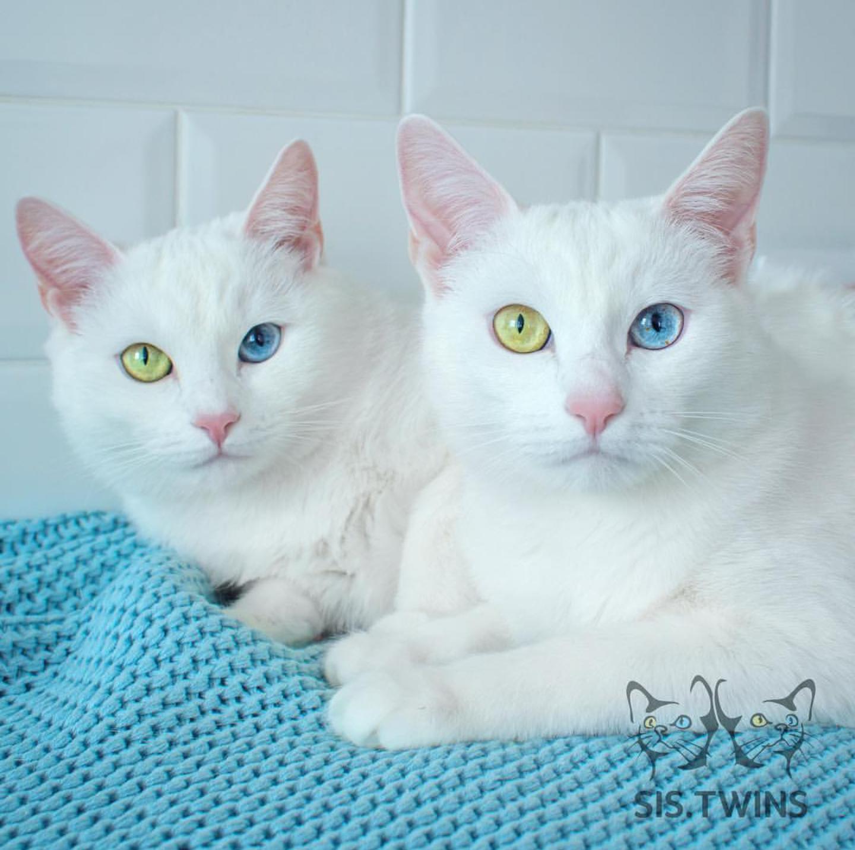 3 Kucing Unik Yang Bikin Takjub Luar Biasa Deh Pokoknya Sarrahgita Com