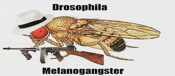 Co ma Drosophila do przestrzeni osobistej?