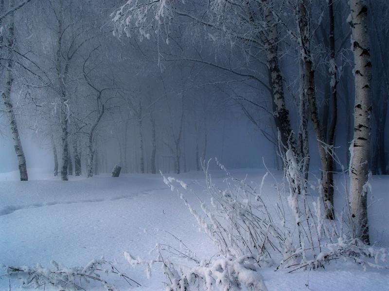 winter snow woods forest trees