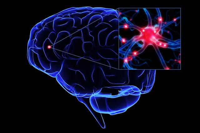 Fakta Unik Otak Manusia Yang Bikin Kamu Kaget