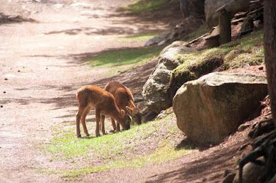 Parc Animalier de les Angles