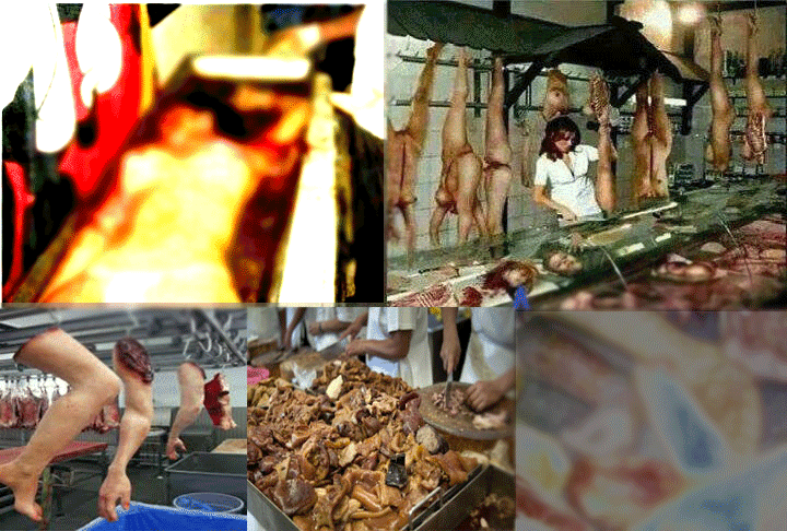 Human Meats Are Being Sold All Around Shazil News