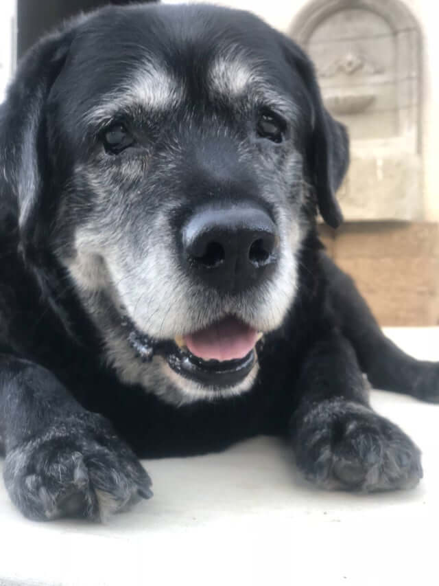 25 Heart-Melting Pictures of the Cutest Senior Dogs