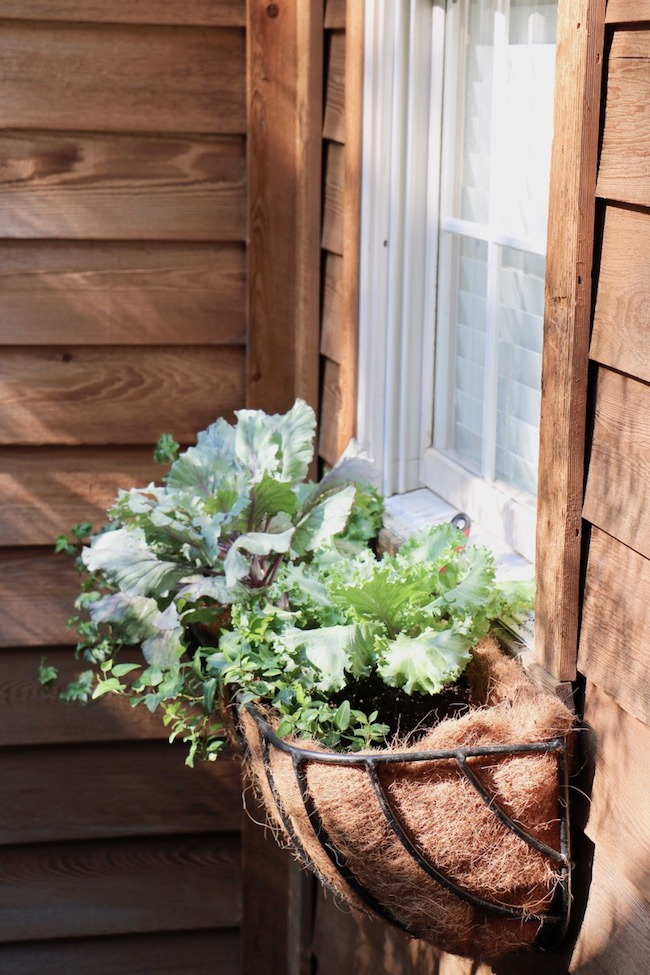 French inspired fall hay rack window box basket purple green ruffled ornamental kale
