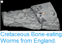 http://sciencythoughts.blogspot.co.uk/2015/04/cretaceous-bone-eating-worms-from.html