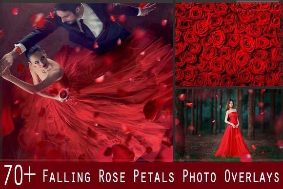 70+ Falling Rose Petals Photo Overlays
