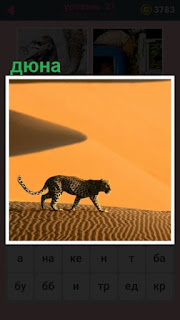 по дюне в пустыне передвигается тигр