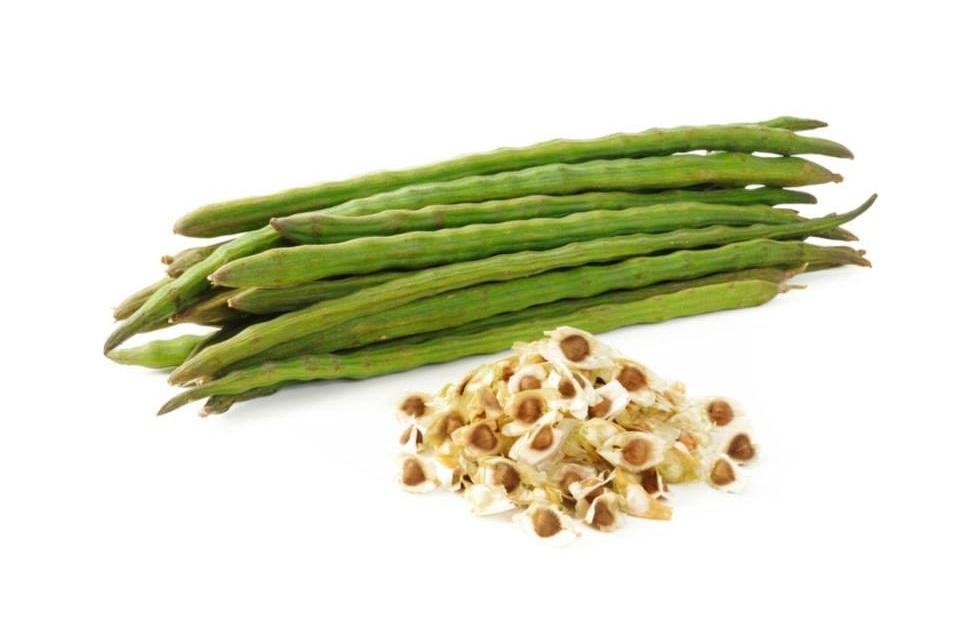 Os benefícios inacreditáveis das sementes de moringa para a saúde  (apoiado por pesquisas)