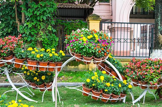 gambar taman rumah dengan taman penuh bunga