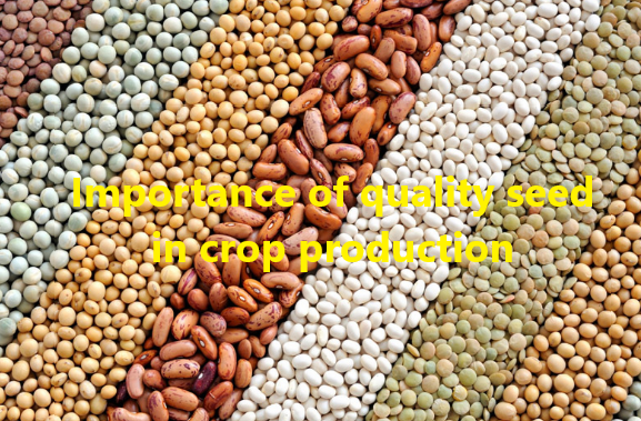 Importance of quality seed in crop production
