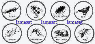 افضل شركة مكافحة حشرات بجدة , رش الحشرات جده