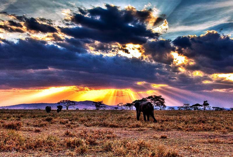 Serengeti National Park; Tanzania, Africa