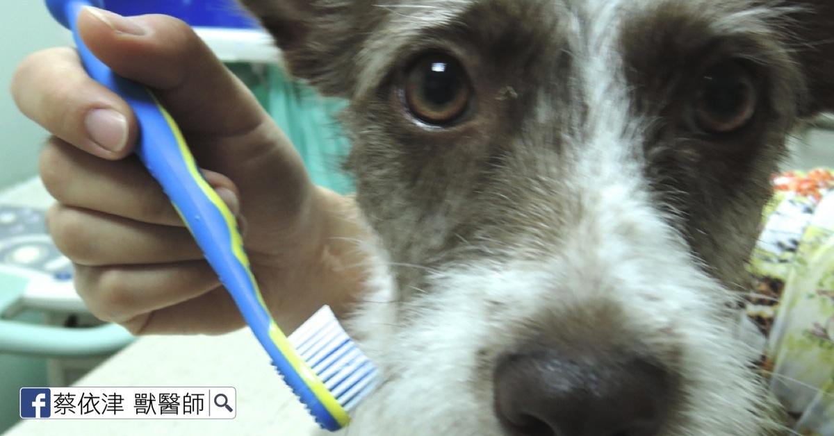 蔡依津 獸醫師: 幫狗貓刷牙竟然有危險?