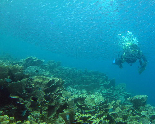 Travel.Tinuku.com Karimunjawa National Park beautiful white sandy islands in Java Sea for diving, snorkeling and camping