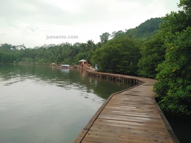 liburan ke hutan bakau lampung