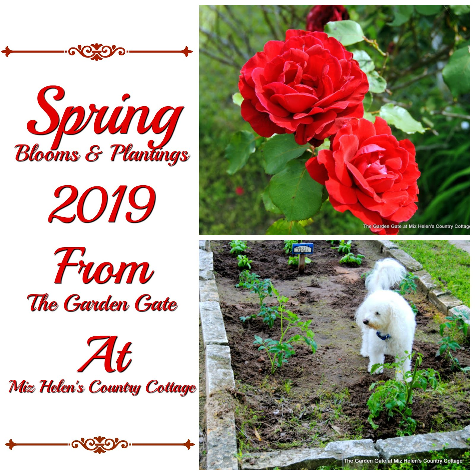 Spring Garden Blooms and Plantings 2019