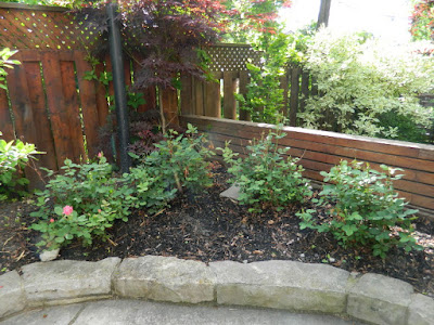 New Back garden perennial bed in Wychwood before by Paul Jung Gardening Services--a Toronto Gardening Company