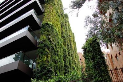 Căn hộ 11 tầng được 'bảo hộ' bởi cây xanh 3